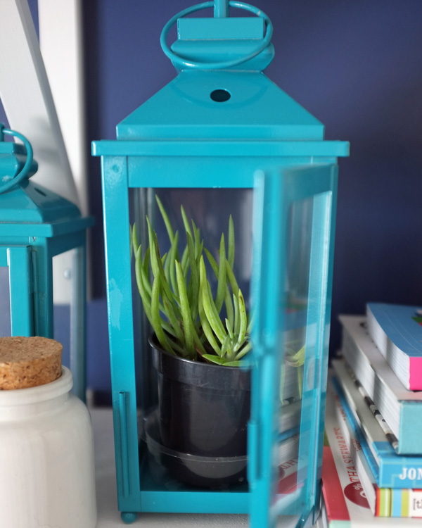 Cute! Put a small plant inside a lantern for a mini greenhouse.