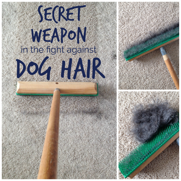 My Secret Weapon That Picks Up More Dog Hair School Of