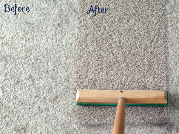 How To Remove More Dog Hair And Make Your Carpet Look New Again Tealandlime