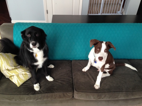 our border collies